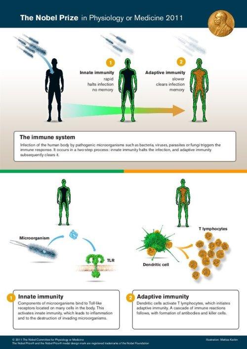 20111003-nobel_prize_medicine