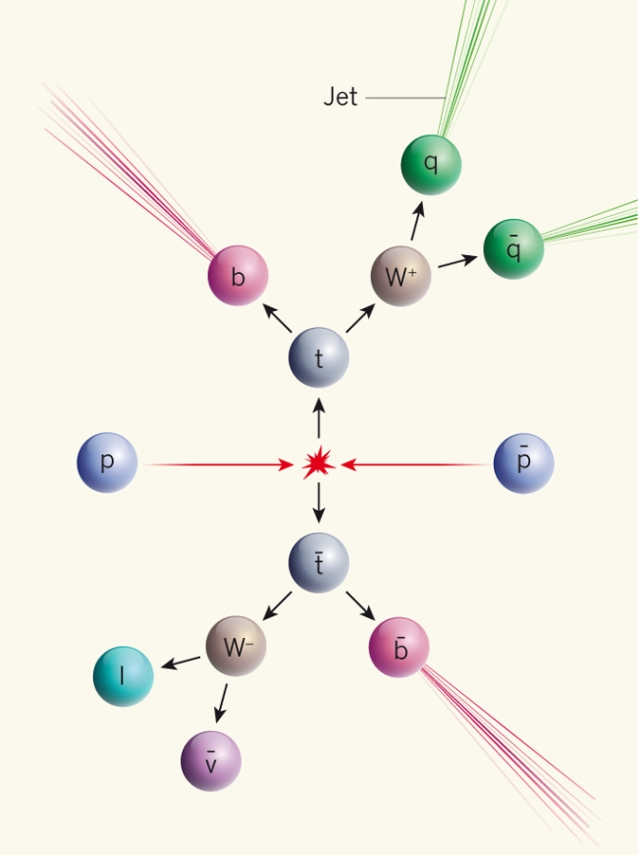 The collisions of protons (p) and antiprotons (p−) in the Tevatron accelerator can, among many other possible reactions, produce a pair of top quarks, one top quark (t) and one antitop quark (t−), which both decay rapidly to lighter particles. By measuring the energies and momenta of these particles accurately, the masses of the original top quarks can be reconstructed. The specific decay pattern shown here corresponds to the 'leptons + jets' channel used by the D0 Collaboration measurement(1), in which the top and the antitop each decay differently. The antitop quark decays into a negatively charged W boson (W−), which in turn decays to a charged lepton (l; an electron, muon or tauon) and an antineutrino (ν−). The top quark decays into a positively charged W boson (W+), which decays into quark (q) and antiquark (q−) jets. Both decays also produce a bottom (b)-quark jet.